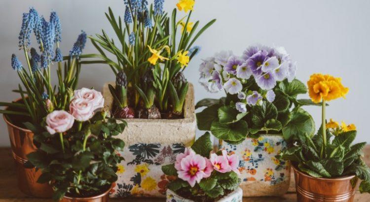 peluang jualan tanaman hias
